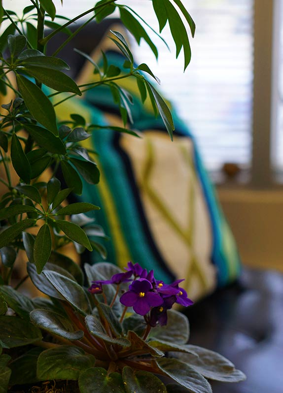 Plants - Private Matters Psychotherapy