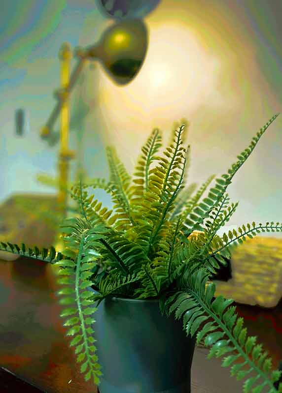 Fern - Private Matters Psychotherapy